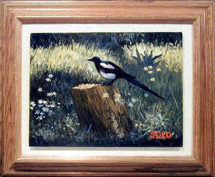 """Colorado Magpie"", oils on masonite"